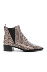 Acne Studios Jensen Snake Booties In Gray Animal Print Gray Animal Print