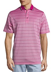 Candc California Collection Skinny Stripe Pique Polo Pink