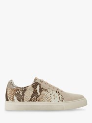Bertie Embber Lace Up Trainers Reptile Leather