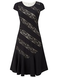 Precis Petite Lenne Stripe Lace Detail Dress Black