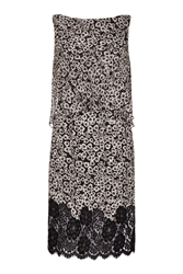 Damsel In A Dress Ebony Lace Dress Multi Coloured