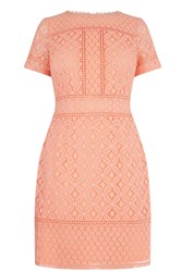 Oasis Isla Lace Shift Dress Coral