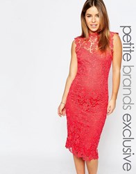 Paper Dolls Petite Sleeveless Pencil Dress With Contrast Lace Detail Coral