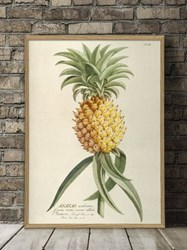 The Dybdahl Co. Ananas Plantae Print