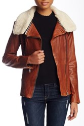 Soia And Kyo Removable Faux Shearling Collar Leather Moto Jacket Brown