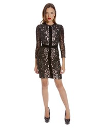 Alexia Admor Banded Lace Dress