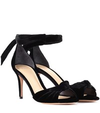 Alexandre Birman New Clarita Midi Velvet Pumps Black