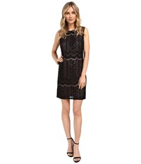 Adrianna Papell Striped Lace Shift Dress Black Pale Pink Women's Dress