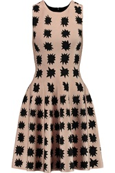 Issa Bay Jacquard Knit Mini Dress