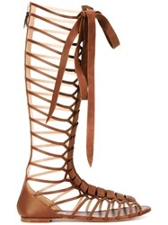 Casadei Knee High Lace Up Sandals Brown