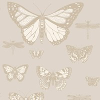Cole And Son Butterflies And Dragonflies Wallpaper 103 15064