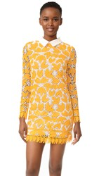 Endless Rose Long Sleeve All Over Lace Dress Marigold
