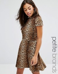 Glamorous Petite Allover Leopard High Neck Skater Dress Brown
