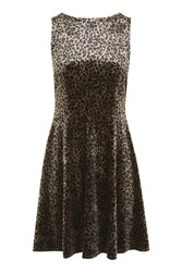 Topshop Leopard Velvet Skater Dress True Leopard
