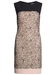 Gina Bacconi Dainty Embroidered Lace Panel Dress Pink Black