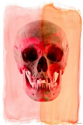 Parvez Taj Skull Canvas Wall Art
