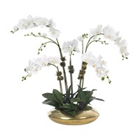 Diane James Phalaenopsis Orchid 5 Stem