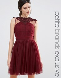 Little Mistress Petite Floral Lace Applique Mini Skater Dress With Mesh Detail Maroon Red