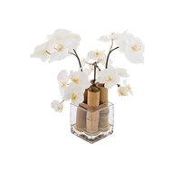 Sia White Phalaenopsis Orchid With Bamboo Small