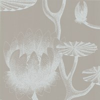 Cole And Son Lily Wallpaper 69 3110