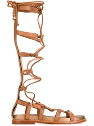 Ash Tall 'Miracle' Gladiator Sandals Brown