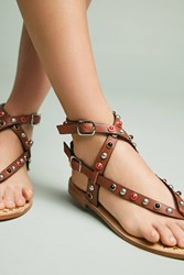 Bibi Lou Studded Gladiator Sandals Brown