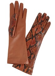 Hamerli Bronze Python Gloves Orange