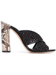 Casadei Snakeskin Effect Crossover Mules Unavailable