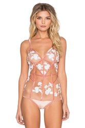 For Love And Lemons Darla Bodysuit Blush