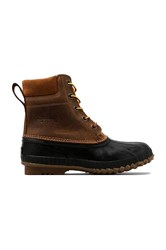 Sorel Cheyanne Lace Full Grain Brown