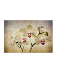 Marmont Hill Pale Orchids Wide Painting Print On Wrapped Canvas Beige