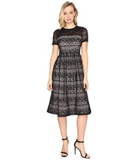Maggy London Victorian Stripe Lace Fit And Flare Black Women's Dress