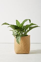 Anthropologie Anias Plant Basket Neutral
