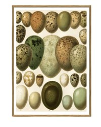 The Dybdahl Co. European Eggs Print