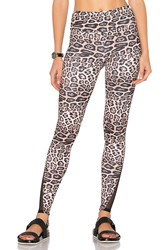 Onzie Shaper Leggings Brown