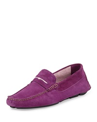 Manolo Blahnik Roadster Men's Suede Penny Driver Purple Pink