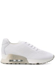 Ash Lucky Knit Sneakers White