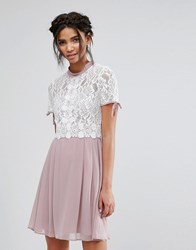 Elise Ryan Skater Dress With Corded Lace Upper Multi