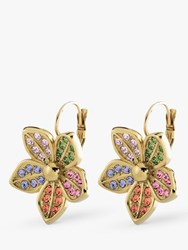 Dyrberg Kern Krocus Crystal Flower Drop Earrings Gold Multi