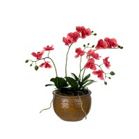 Sia Potted Coral Phalaenopsis Orchid