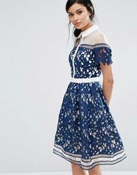 Chi Chi London Premium Lace Panelled Dress With Contrast Collar Navy White