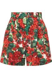 Dolce And Gabbana Pleated Floral Print Cotton Blend Poplin Shorts Red