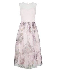 Ted Baker Faunia Torchlit Floral Ballerina Dress Pink