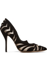 Paul Andrew Zenadia Zebra Effect Suede And Mesh Pumps Black
