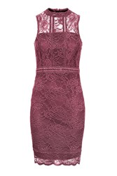 Topshop Petite Scallop Lace Bodycon Dress Pink