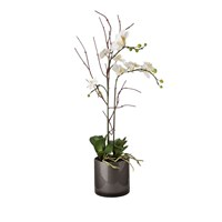 Sia White Phalaenopsis Orchid In Glass Cylinder Vase