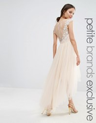 Chi Chi Petite London Lace Scallop Back High Low Midi Dress With Tulle Skirt Cream Tan