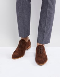 Zign Suede Lace Up Shoes In Brown