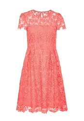 Hallhuber Lace Dress With Sheer Yoke Pink