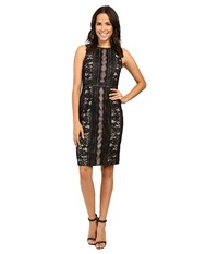 Adrianna Papell Fully Lined Striped Lace And Floral Sheath Dress With Jeweled Neckline Black Women's Dress